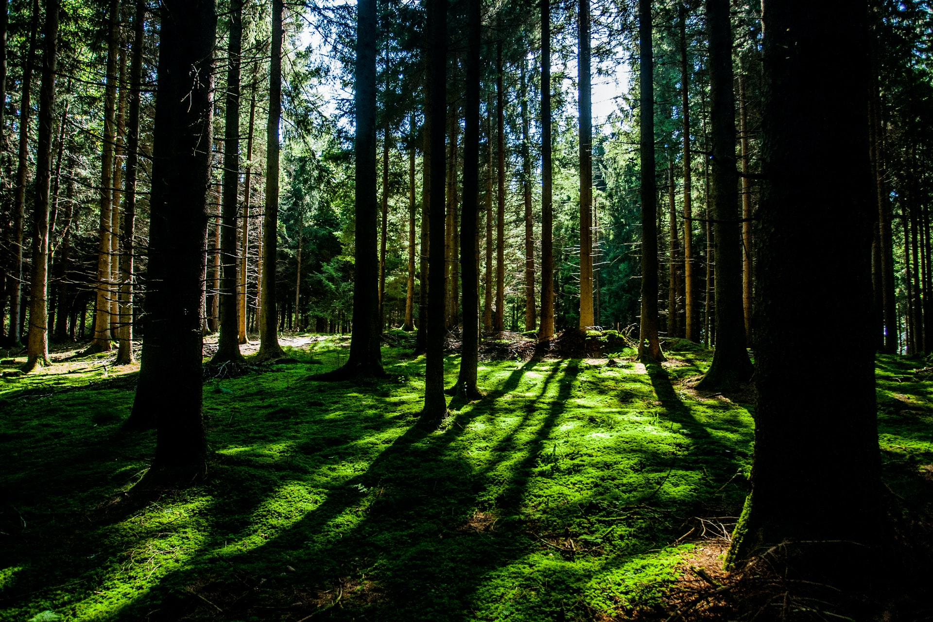 Seeing the forest